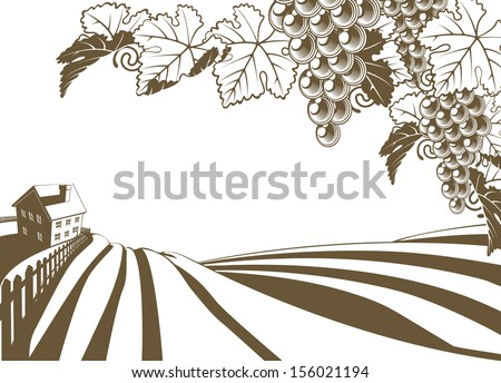 Vineyard grapevine farm illustration with rolling planted hills and farmhouse. Grape bunches and vine in foreground. In vintage retro style. - stock vector