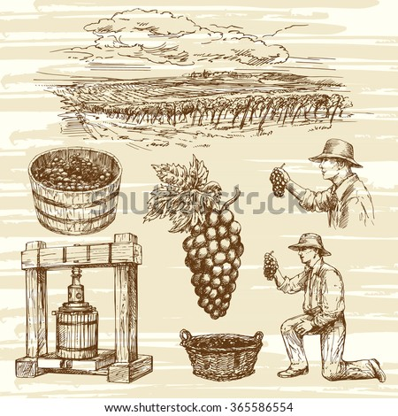 vineyard, hand drawn collection - stock vector
