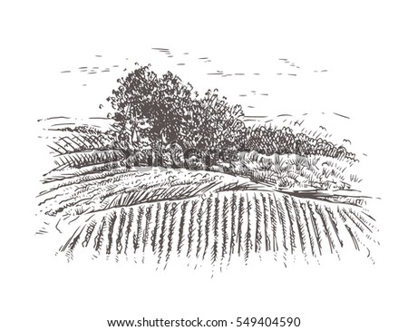 Vineyard Hills Drawing