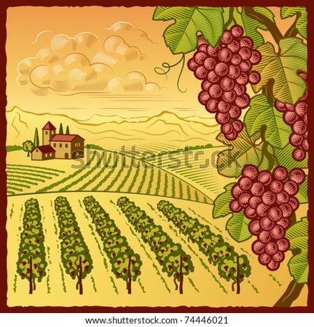 Vineyard landscape. Vector - stock vector