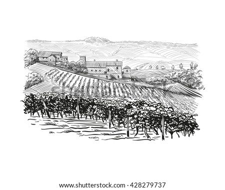 Vineyard landscape vector sketch design. Hand drawn illustration