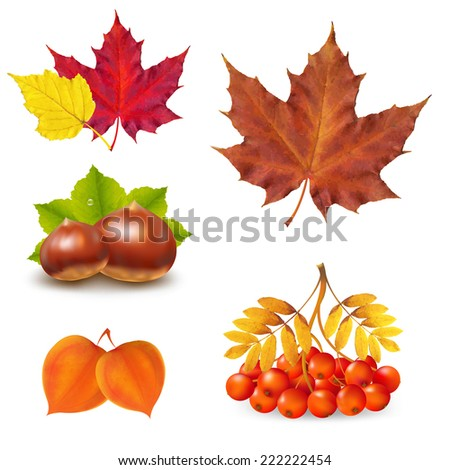 Vintage Autumn Set With Gradient Mesh, Vector Illustration - stock vector
