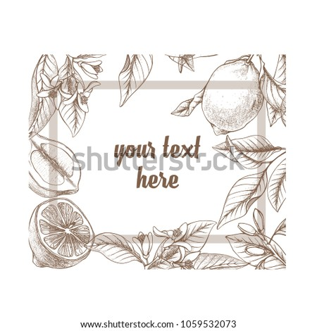 Vintage Botanical Lemon Rectangle Frame Background Hand Drawn Outline Vector Floral Border