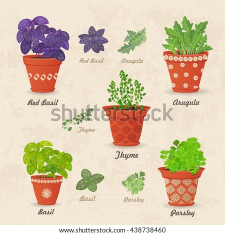 vintage collection of different herbs planted in ceramic pots and fresh herb leaves for your design - stock vector
