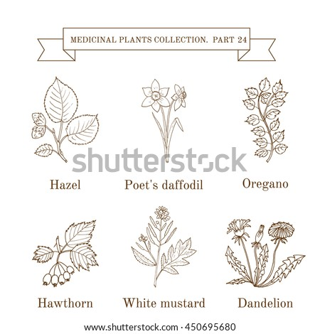 herbal medicine clinical trials