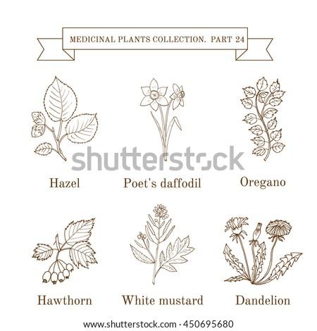herbal medicine clinical trials