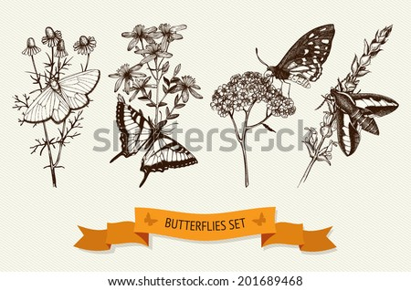 Vintage collection of ink hand drawn butterflies on herbs flowers. Vector set of botanical illustration. - stock vector