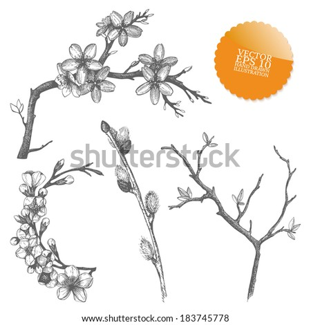 Vintage collection of vector hand drawn blooming  tree twig isolated on white - stock vector