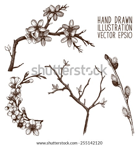 Vintage collection of vector hand drawn blooming tree twig isolated on white. Spring tree twig sketch set - stock vector