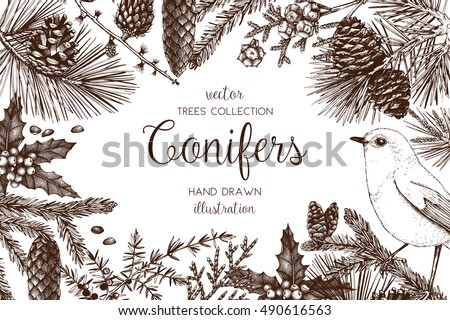 Vintage design for greeting card or invitation for Christmas celebration. Vector frame with hand drawn conifers: pine, spruce, cedar, cypress, fir, larch, juniper. Merry Christmas template