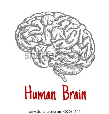 Vintage engraving sketch of human brain with anatomically detailed brainstem and hindbrain. Medicine, science or brainstorm concept - stock vector