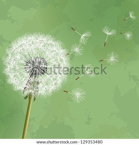 Vintage floral green background with flower dandelion. Invitation or greeting card. Vector illustration - stock vector