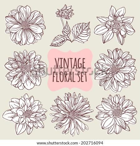 Vintage floral set. Dahlias. - stock vector