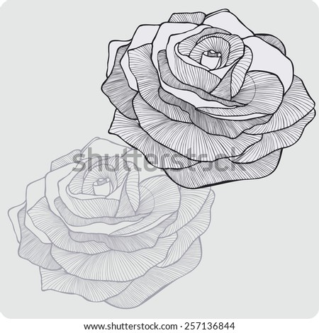 Vintage flower rose, hand-drawing. Vector illustration. - stock vector