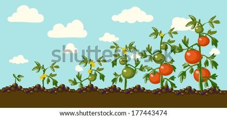 Vintage garden banner with root veggies vector illustration - stock vector