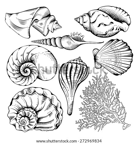 Vintage hand drawn collection of various seashell and coral. Isolated on white background. Vector illustration. - stock vector