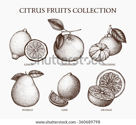 Vintage Ink hand drawn collection of citrus fruits isolated on retro background. Vector illustration of highly detailed citrus fruits sketch - stock vector
