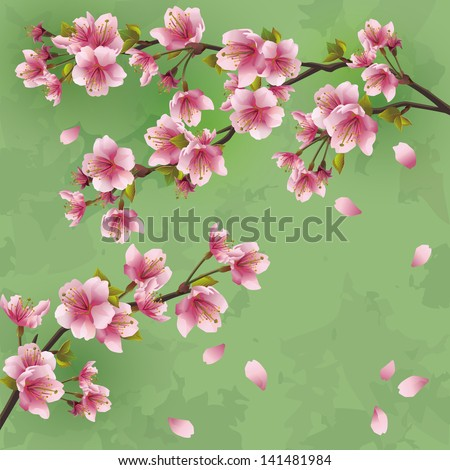 Vintage Japanese background with sakura blossom - Japanese cherry tree. Greeting or invitation card, vector illustration - stock vector