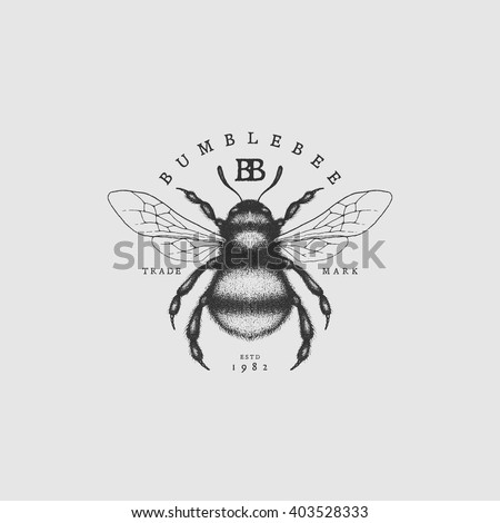 Vintage Label With Ink Hand Drawn Sketch Of Bumblebee Vector Illustration