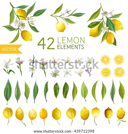 Vintage Lemons, Flowers and Leaves. Watercolor Style Fruits. Vector