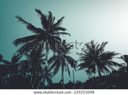 Vintage palm trees. Vector background - stock vector