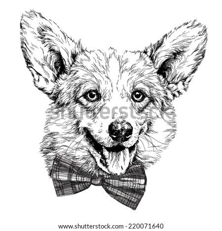 Vintage retro hipster style sketch of funny Pembroke Welsh corgi dog. vector illustration. - stock vector