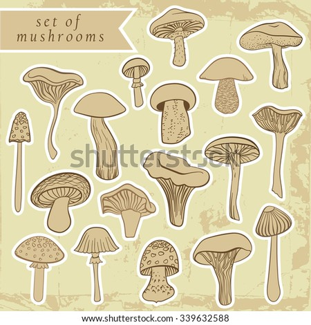 Vintage set of different hand drawn mushrooms in pastel tones