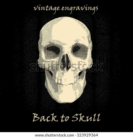 vintage style engraved human skull  - stock vector