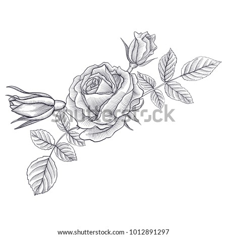vintage vector floral composition with flowers, buds and leaves of roses, imitation of engraving, hand drawn design element