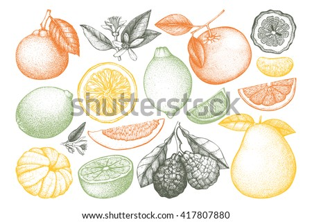 Vintage vector Ink hand drawn collection of citrus fruits isolated on white background. Sketched illustration of highly detailed exotic plants outlines