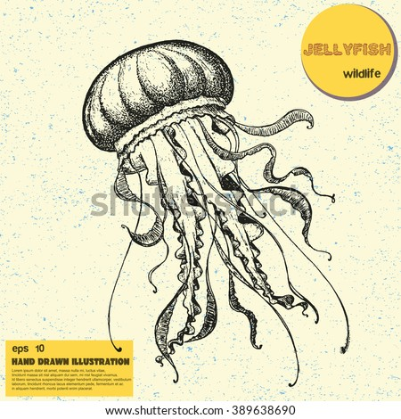 Vintage vector sketch of jellyfish. Hand drawn illustration in line art style with dot elements. Engraved tattoo sketch. Sealife collection - stock vector