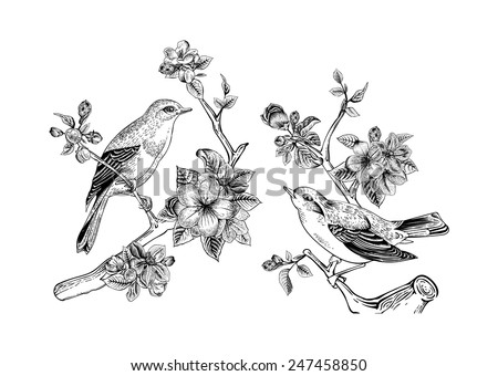 Vintage vector spring card. Birds on a branch of apple blossoms. Monochrome. - stock vector