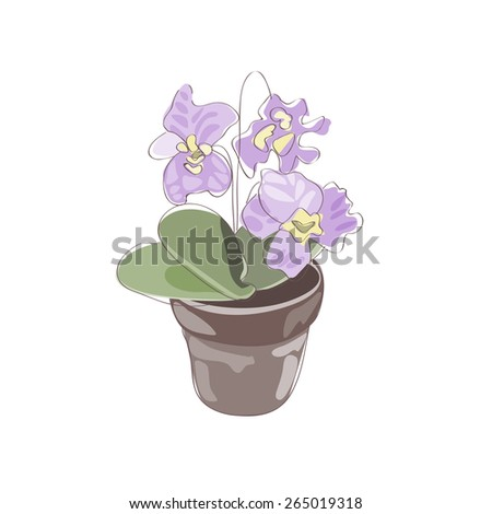 Violet in a flower pot.