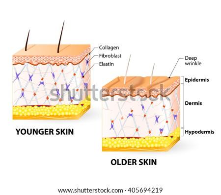 benefícios do colágeno hidrolisado em pó