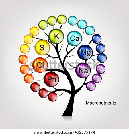 Vitamins tree concept for your design. Vector illustration - stock vector