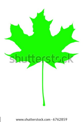 Vivid green maple leaf. Vector graphics
