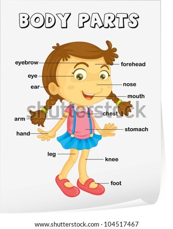 Human Body Parts Pictures with Names  Dictionary for Kids
