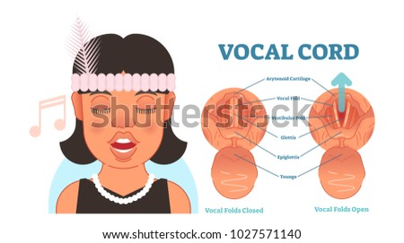 Vocal Cord Anatomy Vector Illustration Diagram Stock Vector ...