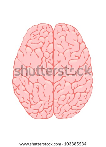 Volumetric pink brain is a top view - stock vector