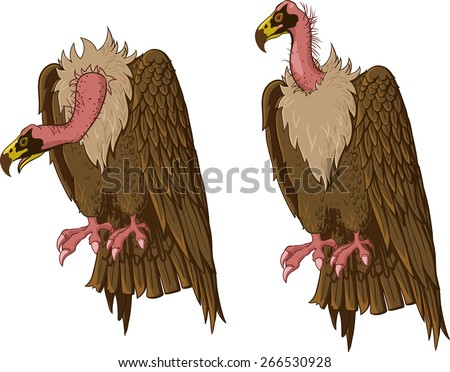 Vulture sitting. Neck in two positions - stock vector