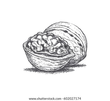 Walnuts Stock Images, Royalty-Free Images & Vectors ...
