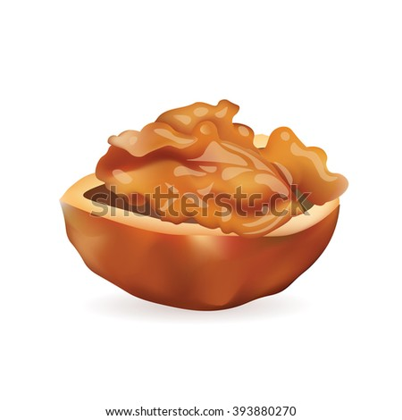 WalNut Realistic Vector Icon Illustration. Isolated On White Background - stock vector
