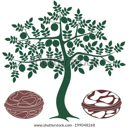 Walnut tree stock photos images pictures shutterstock - Growing french walnuts for a profit ...