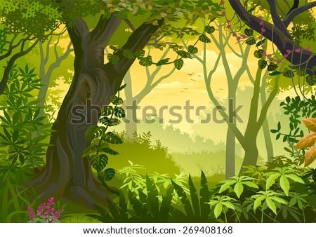 Warm climatic Jungle Illustration - stock vector