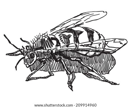 Wasp vector drawing isolated on white background  - stock vector