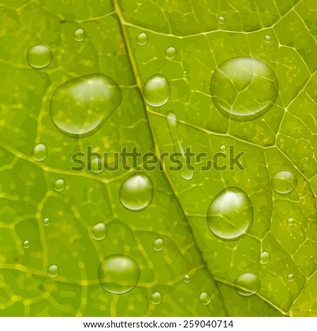 Water drops on green leaf. Ecological environment background. - stock vector