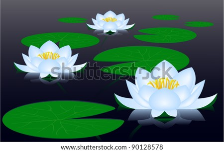 Water lilies - stock vector