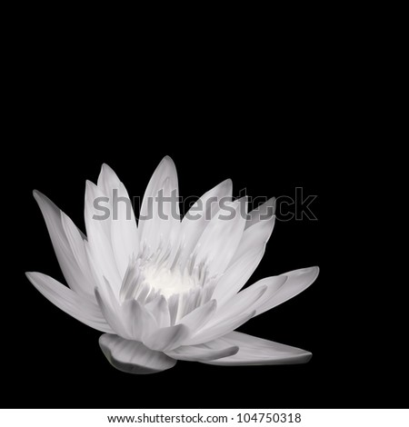 Water Lily Background. Vector Illustration Design - stock vector