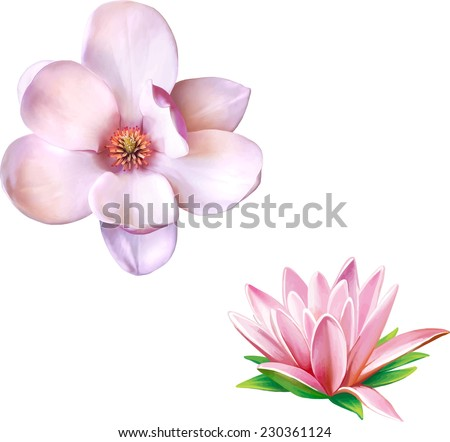 Water lily (lotus) flower. Vector illustration of magnolia flower isolated on white background - stock vector
