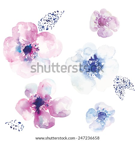 Watercolor Anemone Flower Vector. Vector Watercolor Flowers. Blue and Pink. - stock vector
